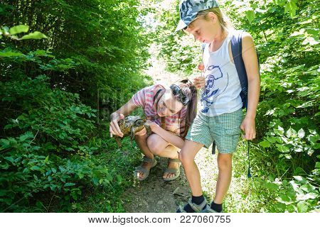 Mother And Son Caught In The Woods Turtle And Look At It. Summer Day In Forest, Family Walk