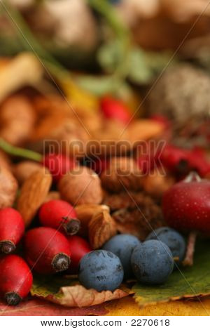 Autumn Or Fall Colour Color Berries Nuts And Leaves