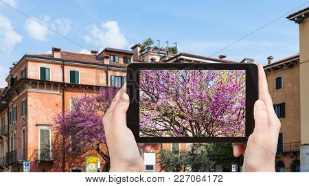Travel Concept - Tourist Photographs Spring Cityscape In Verona City In Italy In Spring Season On Ta