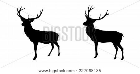 Set Black And White Deer With Horns Isolated On Background. Vector Illustration. Eps10