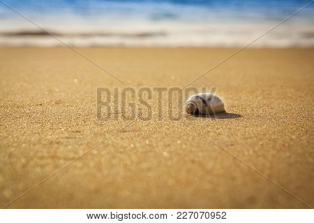 A Mollusc On The Sand Beach Low Depth Of Field