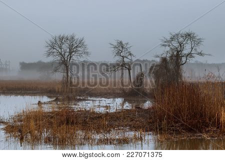 Foggy Landscape In The Greenwood, Hornbeam Trees, Rainy Autumn Wether, Gloomy Mood Autumn Mist Fog R