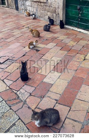 Cats Sit On The Street In The City Of Kotor On The Street On A Square Paving Stone Tiles
