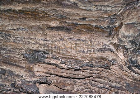 Background, Texture - Rough Surface Of The Petrified Wood