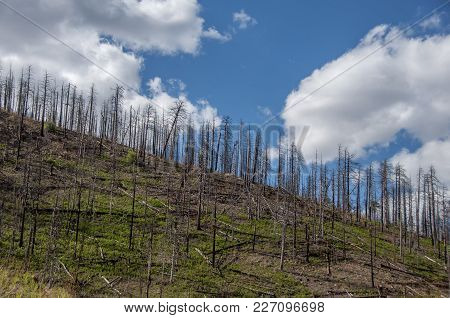 New Green Growth Begins To Emerge After A Fire Had Ravaged This Mountain Side In The Chiricahua Moun