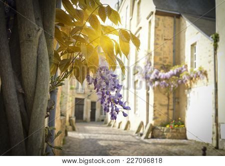 Bunch Of Wisteria With Rays Of Sun In The Old Part Of The City Le Mans, France