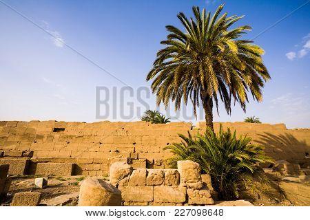 Palm Tree Inside The Karnak Temple, Egypt