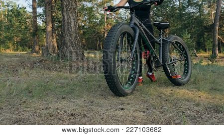 Fat Bike Also Called Fatbike Or Fat-tire Bike In Summer Riding In The Forest. The Woman Rides A Bicy