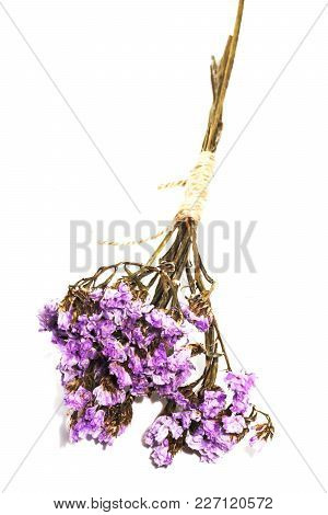 Close Up Single Purple Statice Flower Background Use For Decoration On White Background