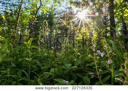 Blinding Radiant Sunlight Through Fresh Lush Greenery Of Summer Forest.