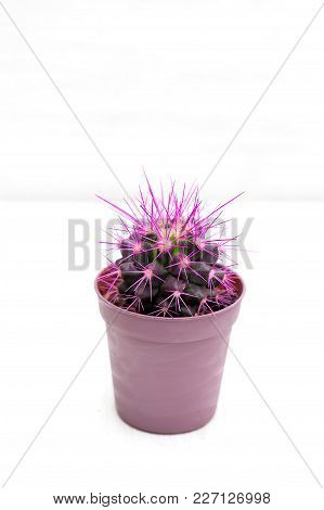 Purple Cactus On A White Background. Vertical Photo
