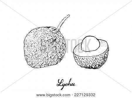 Fresh Fruits, Illustration Of Hand Drawn Sketch Fresh Lychee Or Litchi Chinensis Fruits Isolated On