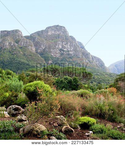 Kirstenbosch Botanical Garden With Fynbos, Which Is A Distinctive Kind Of Vegetation Found Only On T