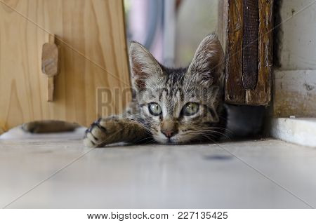 Domestic Cats, Especially Young Kittens, Are Known For Their Love Of Play. This Behavior Mimics Hunt