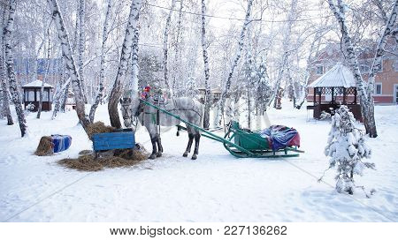 White Horse Harnessed In A Sleigh On A Snow-covered Forest Background