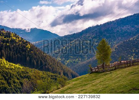 Beautiful Scenery In Mountainous Rural Area. Tree Behind The Fence On A Grassy Slope. Gorgeous Weath