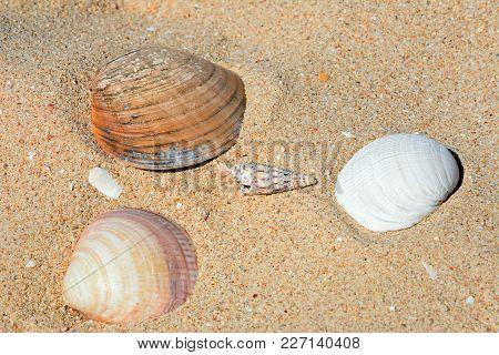 Four Seashells On The Sand, Praia Da Rocha, Algarve, Portugal, Europe.