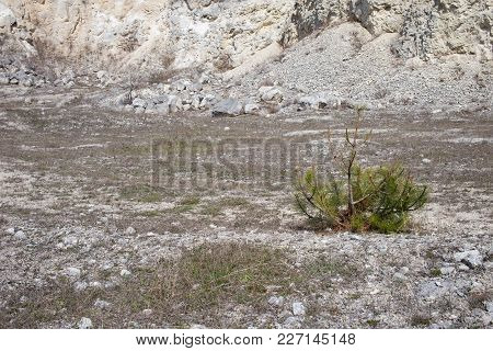 Young Pine Growing In Limestone Quarry. Can Be Used As Wallpaper For A Monitor.
