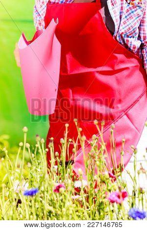 Gardening. Closeup Woman Working In Her Backyard Garden Watering Plants Flowers Outdoor