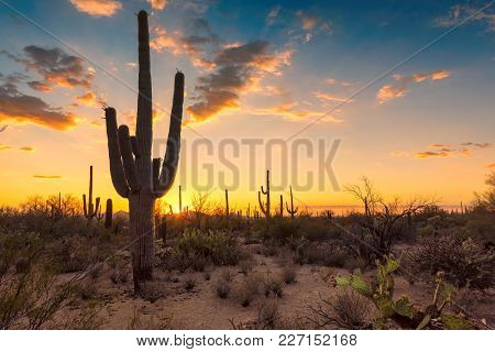 Sunset In Wild West Whith Saguaros, Sonoran Desert Near Phoenix.