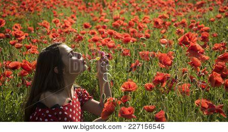 Drug, Opium, Narcotics, Carelessness. Summer, Spring, Poppy Flower. Opium Poppy, Youth, Freshness, E