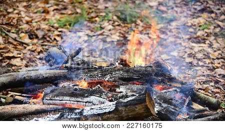 Bonfire Or Fire In The Forest, Picnic, Barbecue. Picnic Concept. Autumn Land With Fallen Orange And
