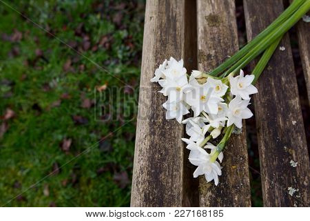 White Narcissi On A Weathered Wooden Garden Bench