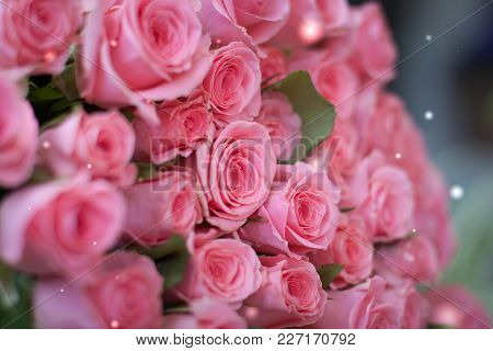 A Bouquet Of Pink Roses. Spring Or Wedding Postcard Concept. Toned.