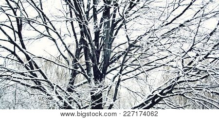 A Snowy Day. Everything Covered With Snow. Winter Scene In The Park. Aged Photo. Snow Covered Trees