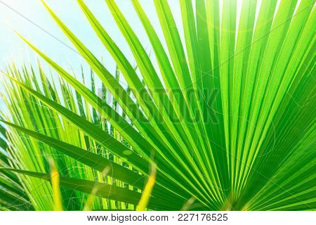 Beautiful Striped Botanical Pattern From Large Round Spiky Palm Tree Leaves On Clear Blue Sky Backgr