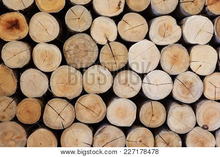 Close-up Round Cut Down Cross Section Tree Log With Annual Rings Wood Texture Pattern, Wall Decorate