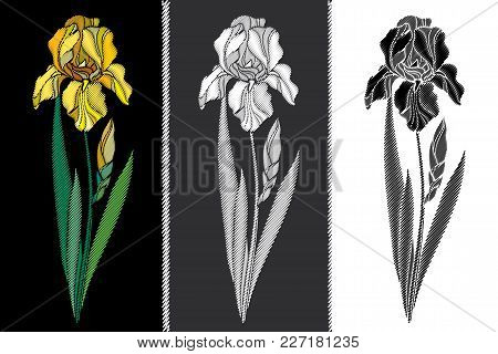 Vector Set With Embroidery Iris Flower In Pastel Yellow, Black And White, Bud And Leaves Isolated. F