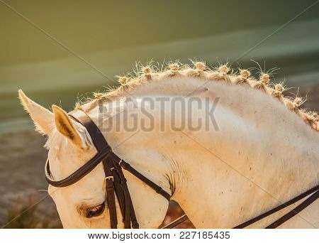White Horse, Advanced Dressage Test On Equestrian Competition. Equine Theme. Saddle, Bridle, Boots A