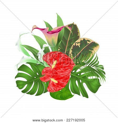 Tropical, Flowers,lilies ,cala, Anthurium, Flower, Vector, Ficus, Floral,hand Draw , Watercolor, Pat