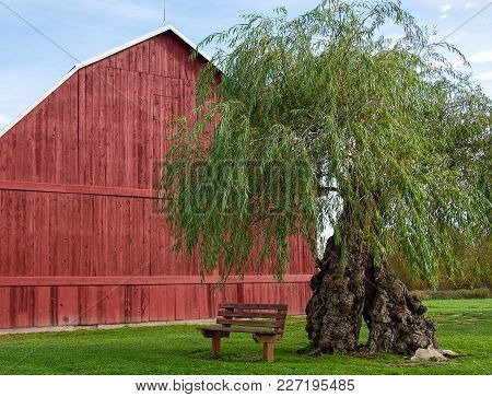 Red Wooden Barn With Tree And Empty Bench On Grass