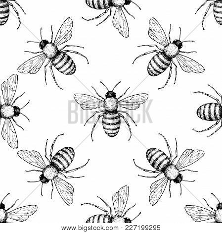 Bee Vector Seamless Pattern. Hand Drawn Insect Background. Engraved Objects.  Vintage Drawing For Ho