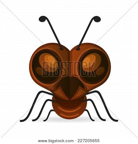 Brown Ants Isolated On White. Insect Icon. Termite. Eusocial Insect. Brown Animal Insect Creature Wi