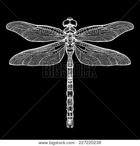 White Dragonfly Aeschna Viridls, Isolated On Black Background. Dragonfly Tattoo Sketch. Coloring Boo