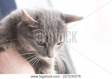 The Beautiful Gray Cat Near Windows For Any Goals