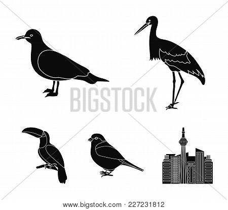A Stork, A Seagull And Various Species. Birds Set Collection Icons In Black Style Vector Symbol Stoc