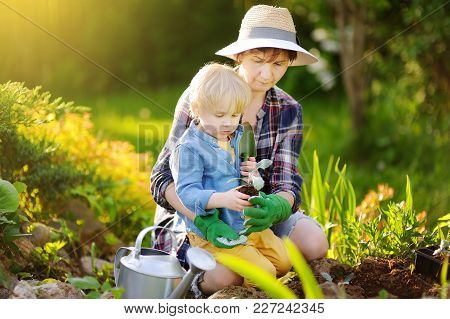 Beautiful Woman And Her Cute Son Planting Seedlings In Bed In The Domestic Garden At Summer Day. Gar