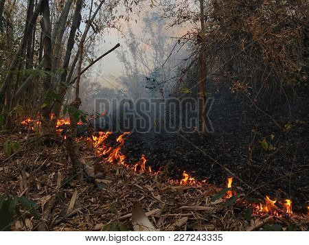Authentic Shot Of Burning Nature By Human On Purpose To Collect Mushrooms Easier In The North Of Tha