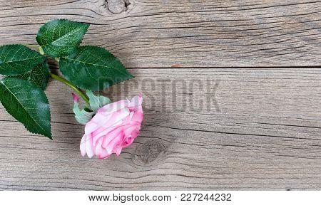 Single Pink Rose On Weathered Wooden Boards