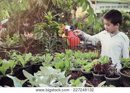 Young Tween Asian Boy Watering Plants In Reuse Old Plastic Containers, Eco, Reuse, Montessori Educat