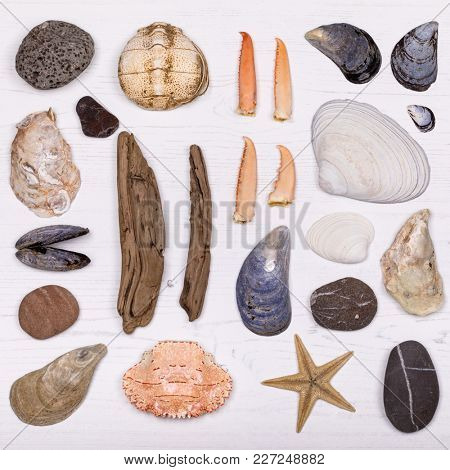 An overhead view of a collection of shells, lobster claws, pebbles, driftwood and crab shells. Flat lay design in a square over bleached white wood background.