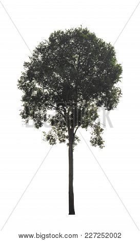 Green Tree Isolated At On White Background Of File With Clipping Path .