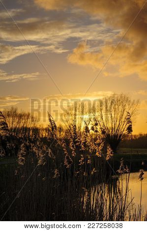 Backlit Image Of A Reed, With The Setting Sun In The Background. East-flanders, Belgium On A Late Wi