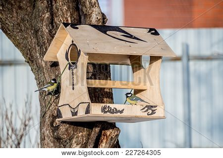 Feeder For Birds, Titmouses Eating From Bird Feeders In Winter