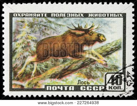 Luga, Russia - February 08, 2018: A Stamp Printed By Russia (ussr) Shows Moose (north America) Or El