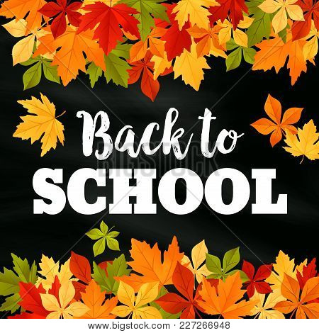 Back To School Poster Of September Autumn Leaves Foliage. Vector Falling Maple, Oak, Rowan Or Chestn